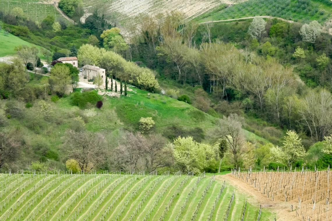 SanGimignano2006-036
