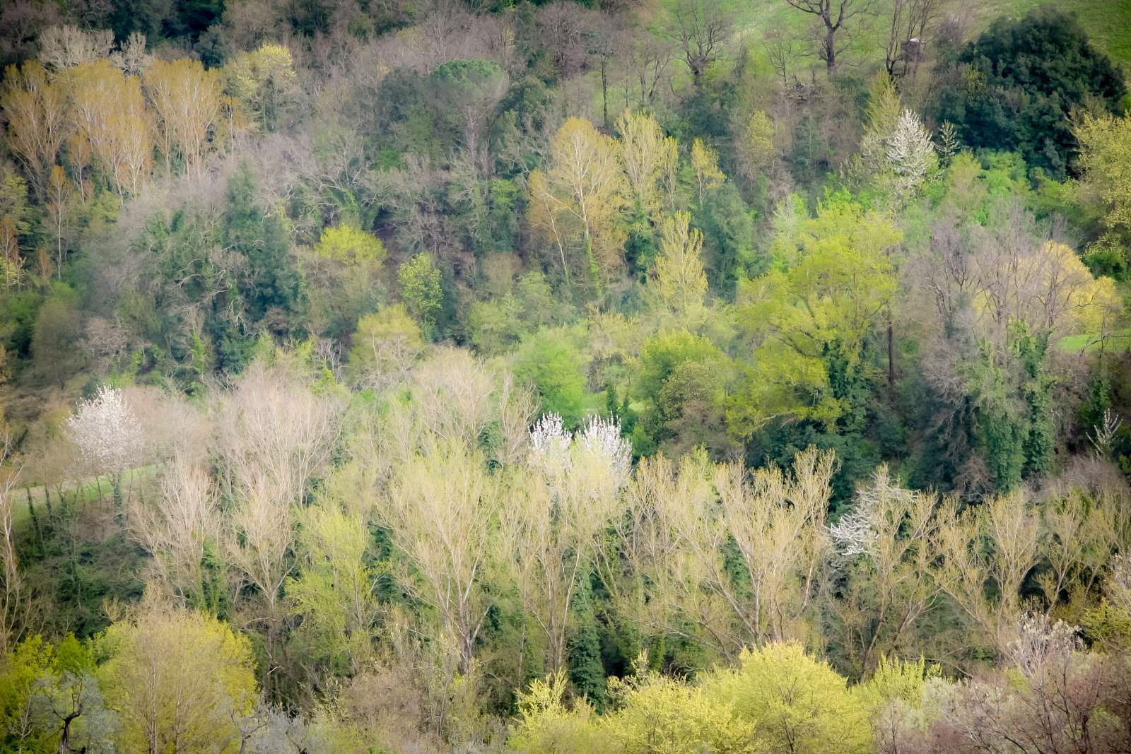 SanGimignano2006-044
